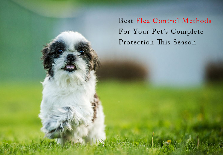 What is the best flea control for cats and dogs