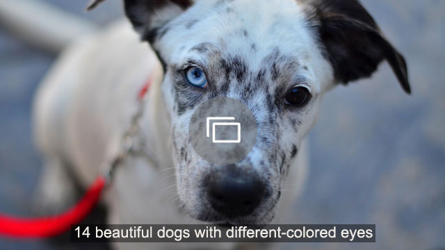 The Fashion Designer Dog Will Be Thousands Of Dollars - Pet Care