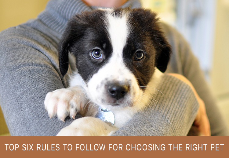 Rules To Follow While Choosing The Right Pet