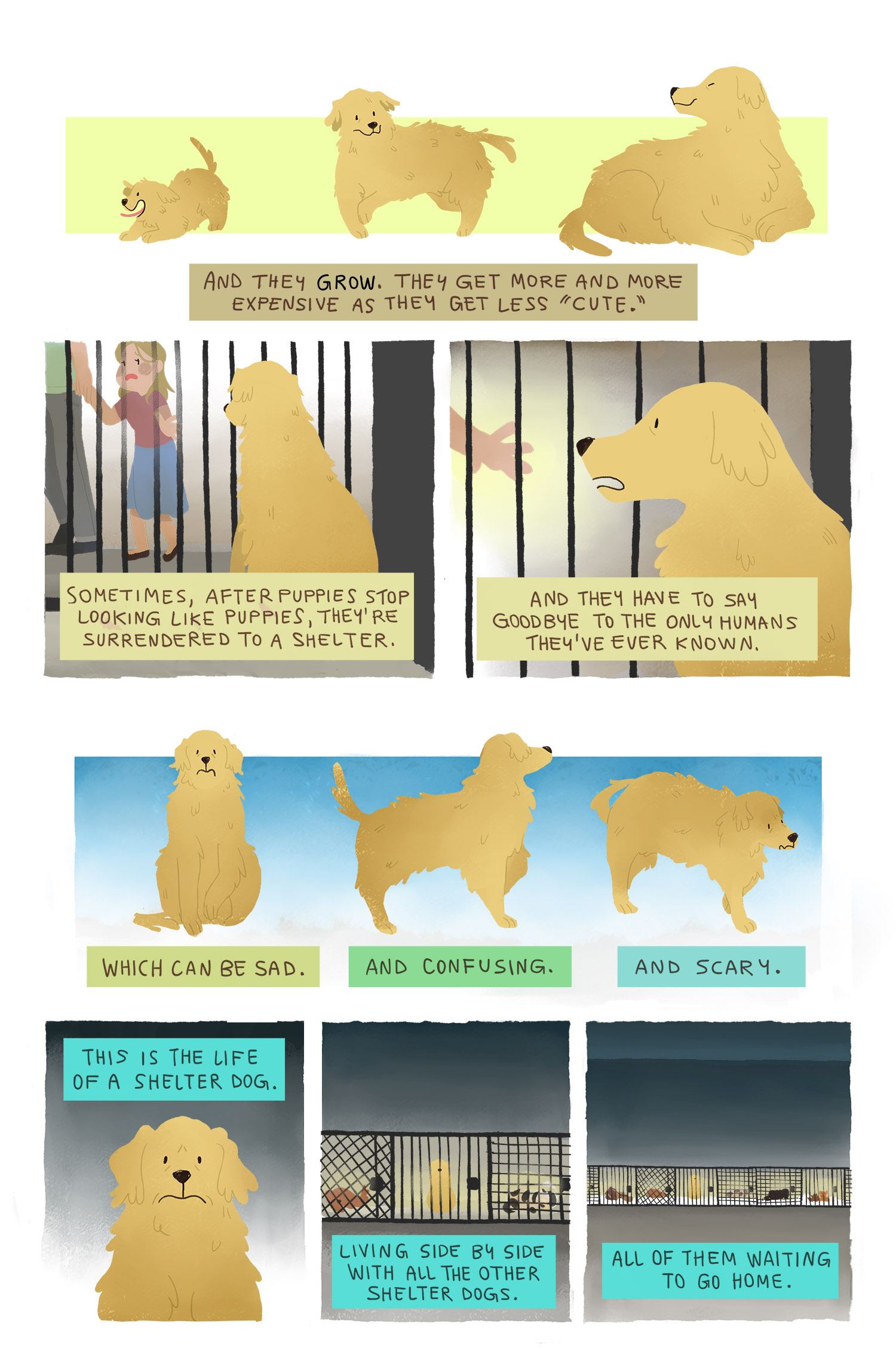 life-of-a-shelter-dog-page-2