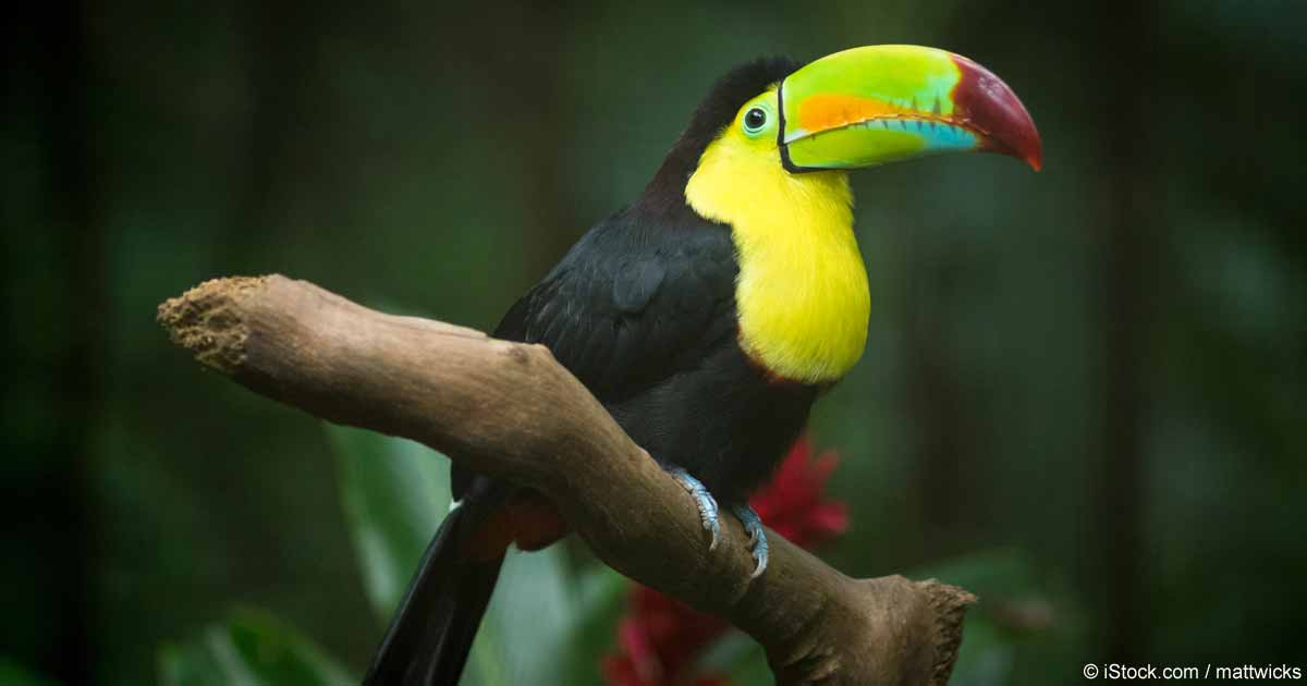 tropical toucans found in southern california pet care tips